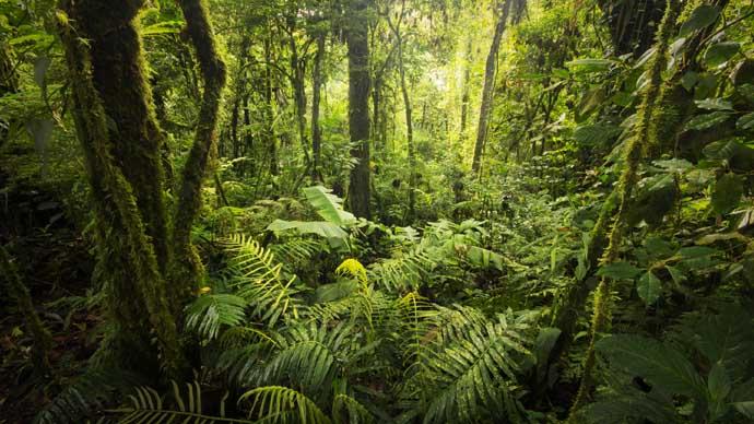 Impfungen für den Regenwald von Costa Rica