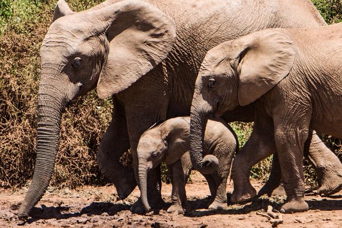 Autorundreise Südafrika Addo Elephant Park